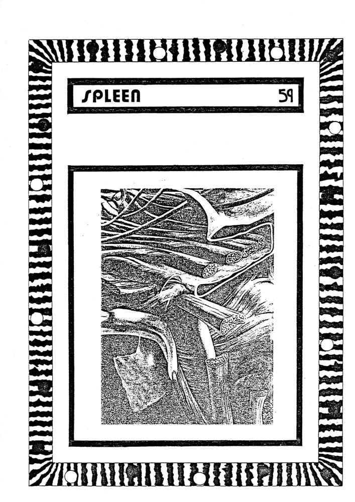 Spleen-59-front